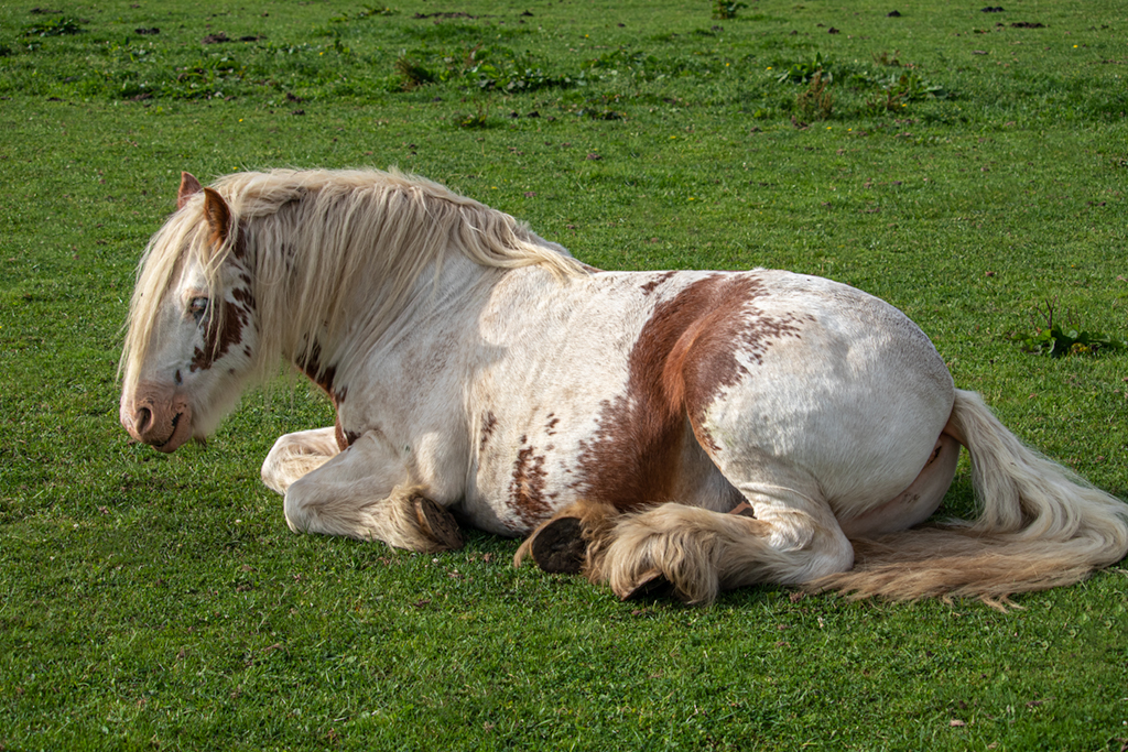 Equine Photograph Eight