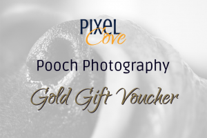 Gold Pooch Photography Gift Voucher Image