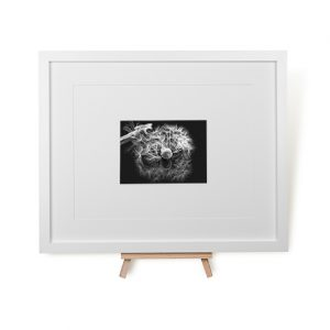 Dandelion Reflection Framed Print
