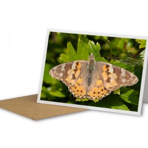 Painted Lady Greetings Card And Envelope