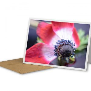 Poppy Seeds Greetings Card And Envelope