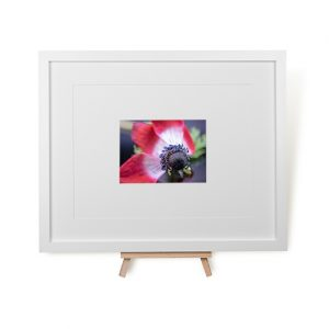 Poppy Seeds Framed Print