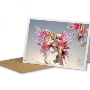 Sprouting Blossom Greetings Card And Envelope
