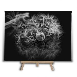Dandelion Reflection Canvas Print