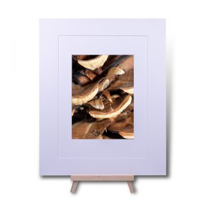 Pine Cone Double Mounted Print