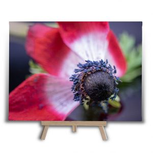 Poppy Seeds Canvas Print
