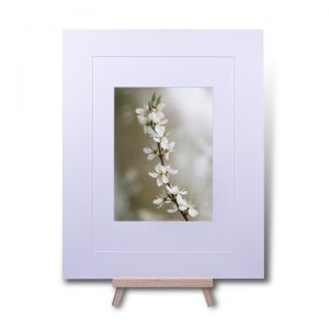 Spring Blossom Double Mounted Print