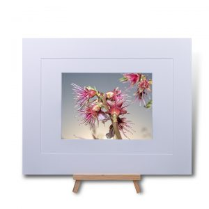 Sprouting Blossom Double Mounted Print