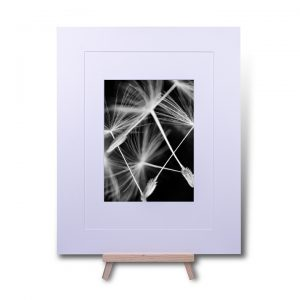 Tumbling Needles Double Mounted Print