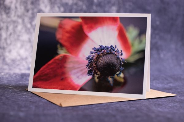 Photograph of greetings card